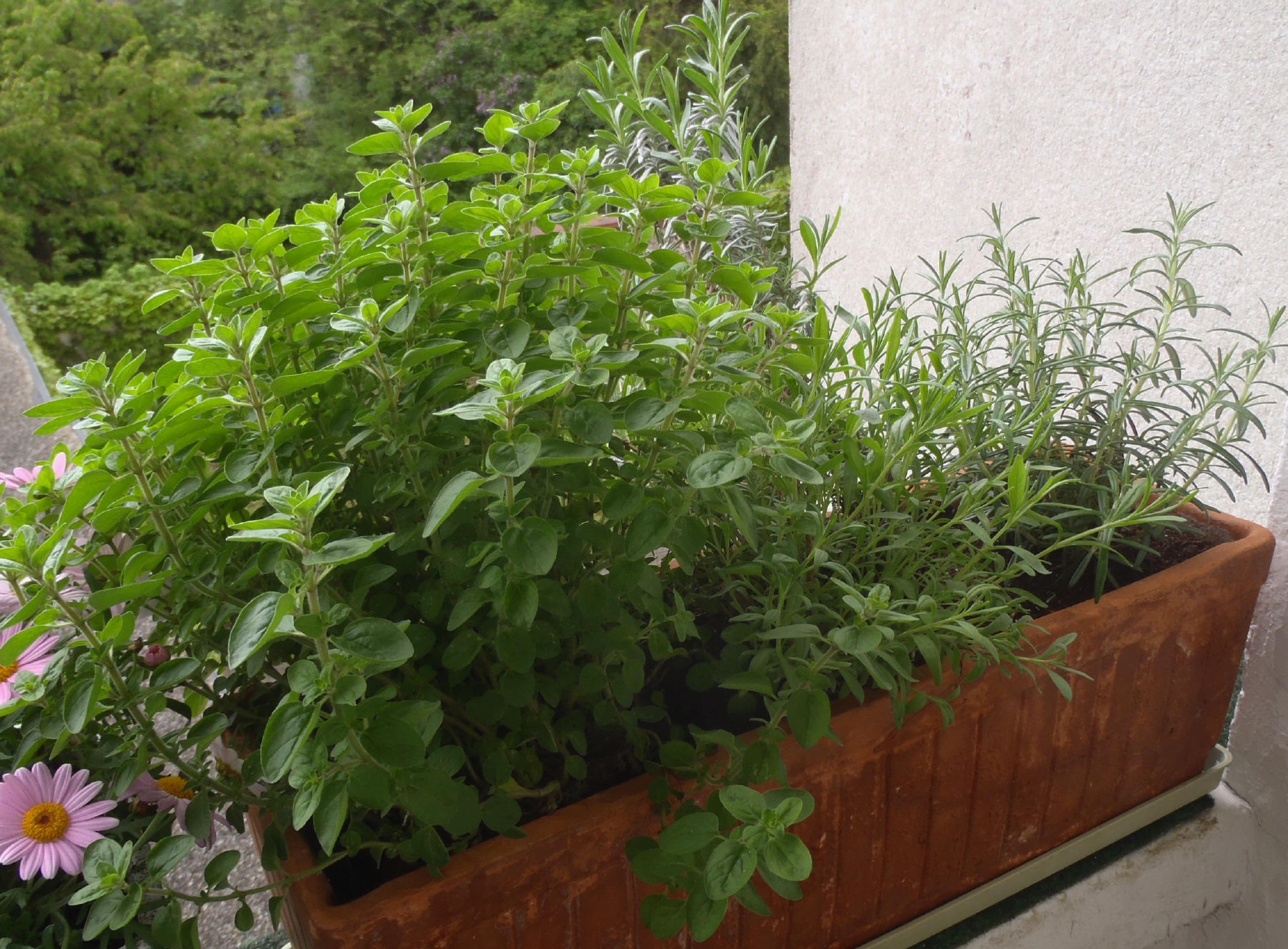 oregano-lavendel-rosmarin